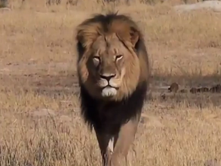 Cecil the Lion's Legacy