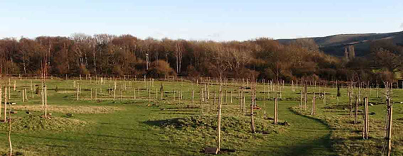 Clayton Wood Natural Burial Ground