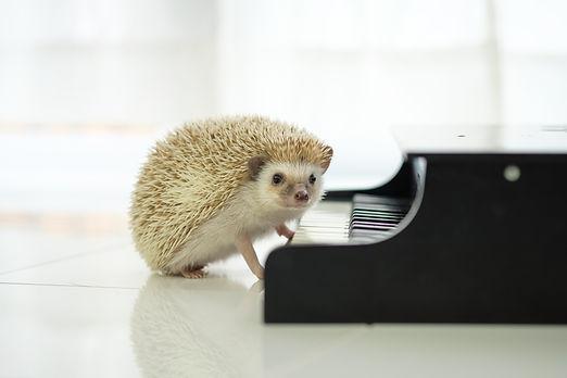 ハリネズミ ピアノ