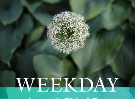 【プランのご紹介】平日に至福のリラックスタイムをWEEKDAY PLAN