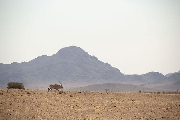 africa 115.jpg