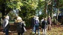 A la découverte des arbres centenaires