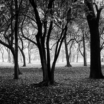 Black and white photograph of trees in Bosque Chapultapec