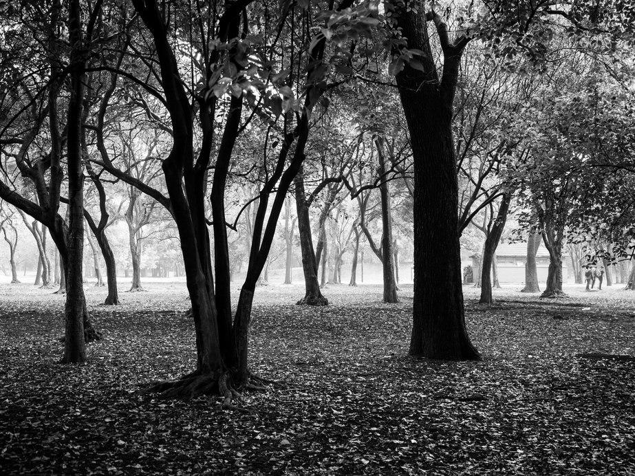A rainy day in Bosque de Chapultepec