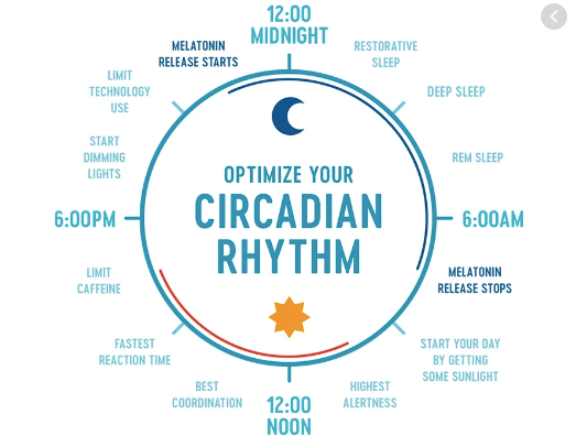 How to optimize your circadian rhythm infographic