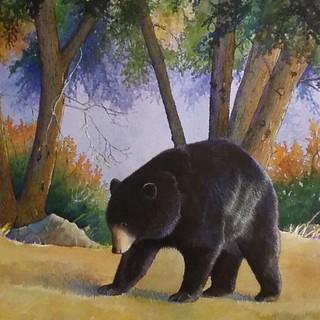 Black Bear--Colorful woods.jpg
