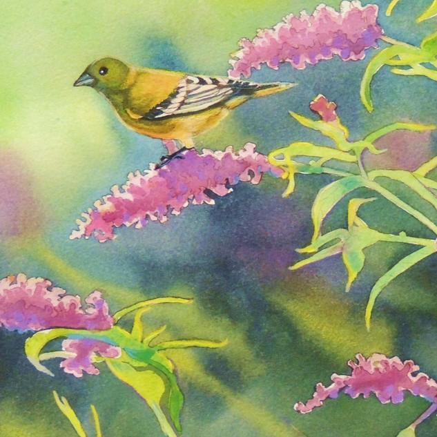 Goldfinch on Butterfly Bush