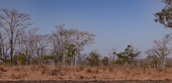 Panna wildlife 2