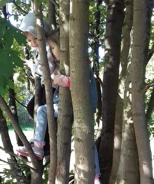 Climbing trees at forest school