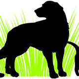 Logo Large PNG.png