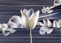 2010 - Tulip.jpg