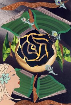 2006 - Black Rose.jpg