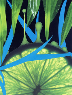 2011 - Limeness.jpg