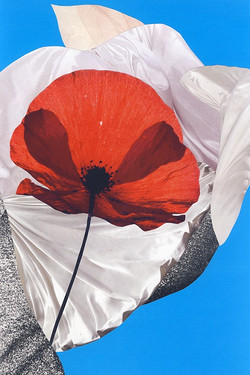 2012 - Poppy in the Air.jpg