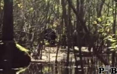 swamp ape review.jpg
