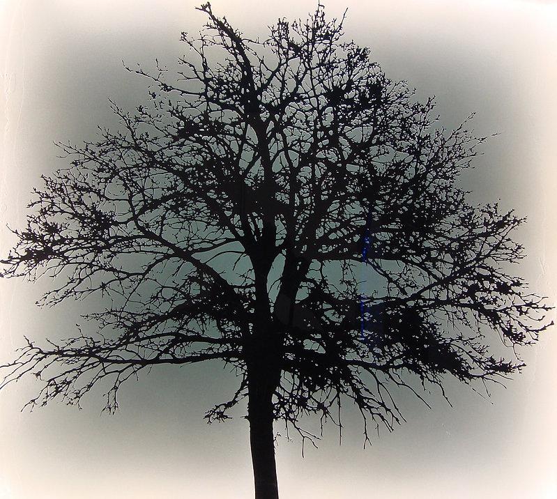 sandblasted glass winter tree edge lit with warn white leds