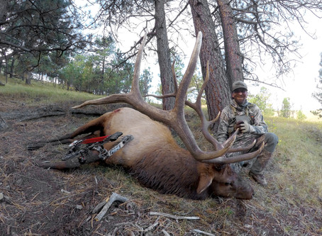 Issue 167 - Sealing the Deal: Hunting Mature Bulls