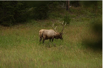 Issue 109 - Closing the Distance: Elk Stalking Tactics