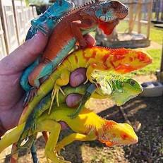 Lizards r us.jpg