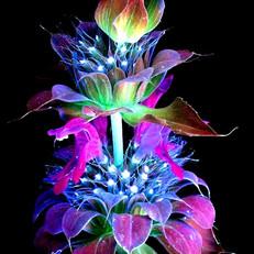 Illuminated Ultraviolet.jpg