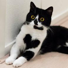 Cat Heart.jpg