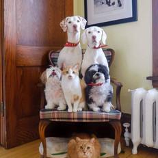 Dog Cat Chair.jpg