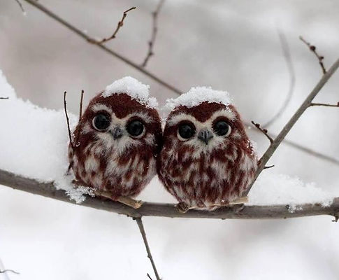 xmas owls 2.jpg
