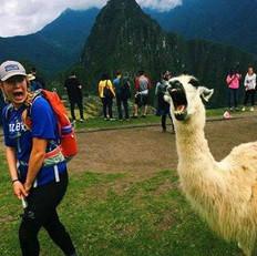 Llama Love.jpeg