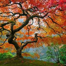 Tree Love.jpg