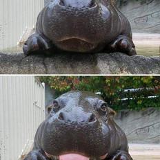 Hannah The Hippo.jpeg