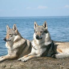 Beloved Dogies.jpg