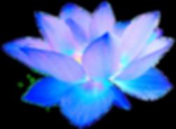 We Are Love Sapphire Starflower clear ba