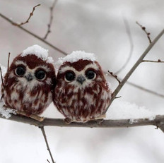 xmas owls.jpeg