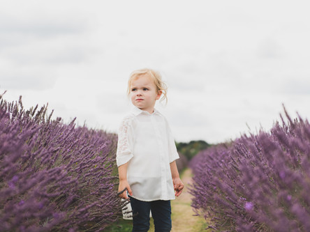 Mayfield Lavender Mini Sessions