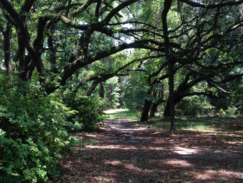 oak-trees.jpg