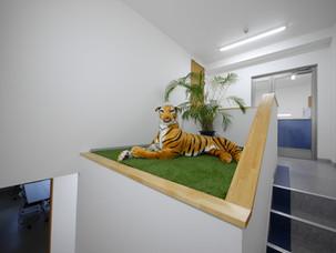 事務所前のトラ