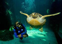 V&A Two Oceans Aquarium