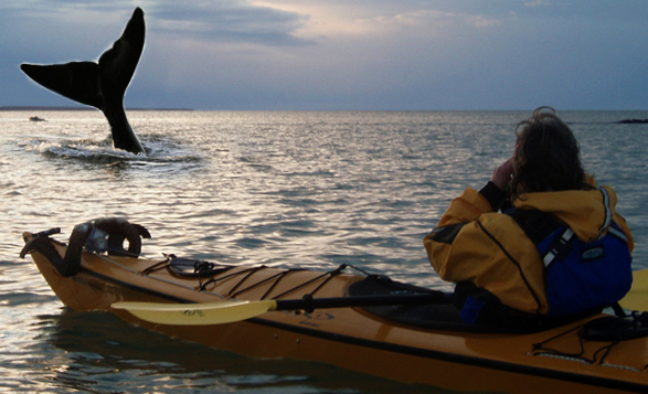 Sea Kyaking with Downhill Adventures