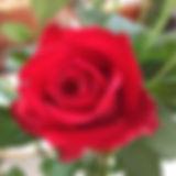 1531963_711513182206731_754960950_o.jpg