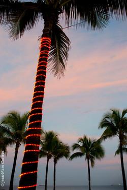Florida_Christmas,_photo_©_Jean-Marc_Carisse_2015_4892
