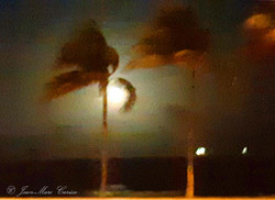 Florida Palm Trees, cell ©Jean-Marc Cari