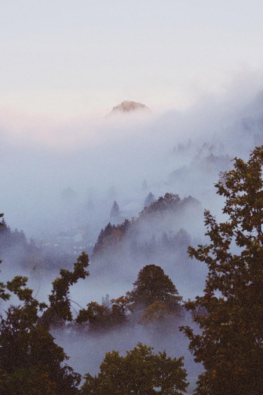 Morning fog, Nationalpark Kalkalpen