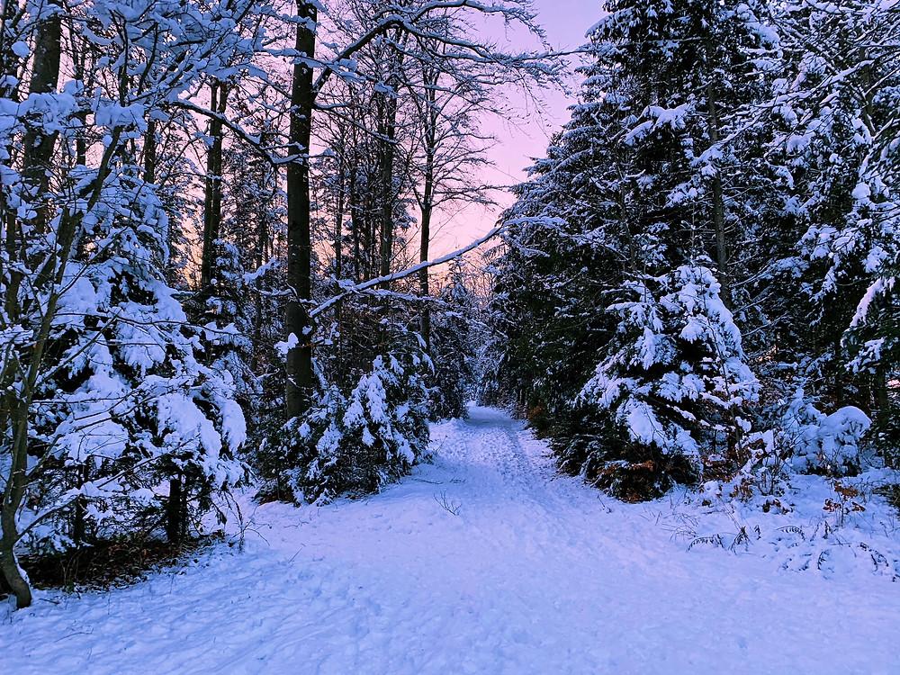 verschneiter Wald im Waldviertel