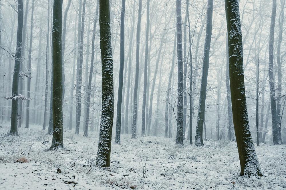 Schnee im Waldviertel