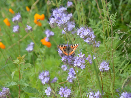Un jardin coloré, gourmand et stimulant pour la biodiversité