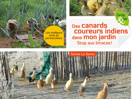 Livre sur les canards coureurs indiens : Précommandes
