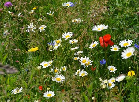Les nouvelles semences de fleurs sont disponibles !