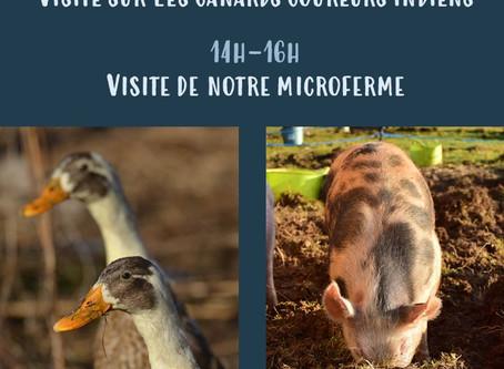 19/01/2020 : Visite canards coureurs indiens + Visite de la microferme