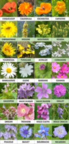 2019-2020 semences fleurs.jpg