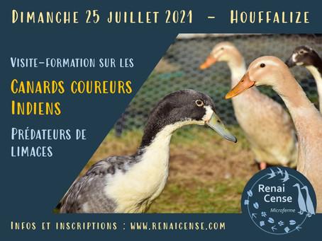 25 juillet 2021 : Visite-formation sur les canards coureurs indiens